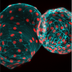 Imaging thumbnail photo of two cells.