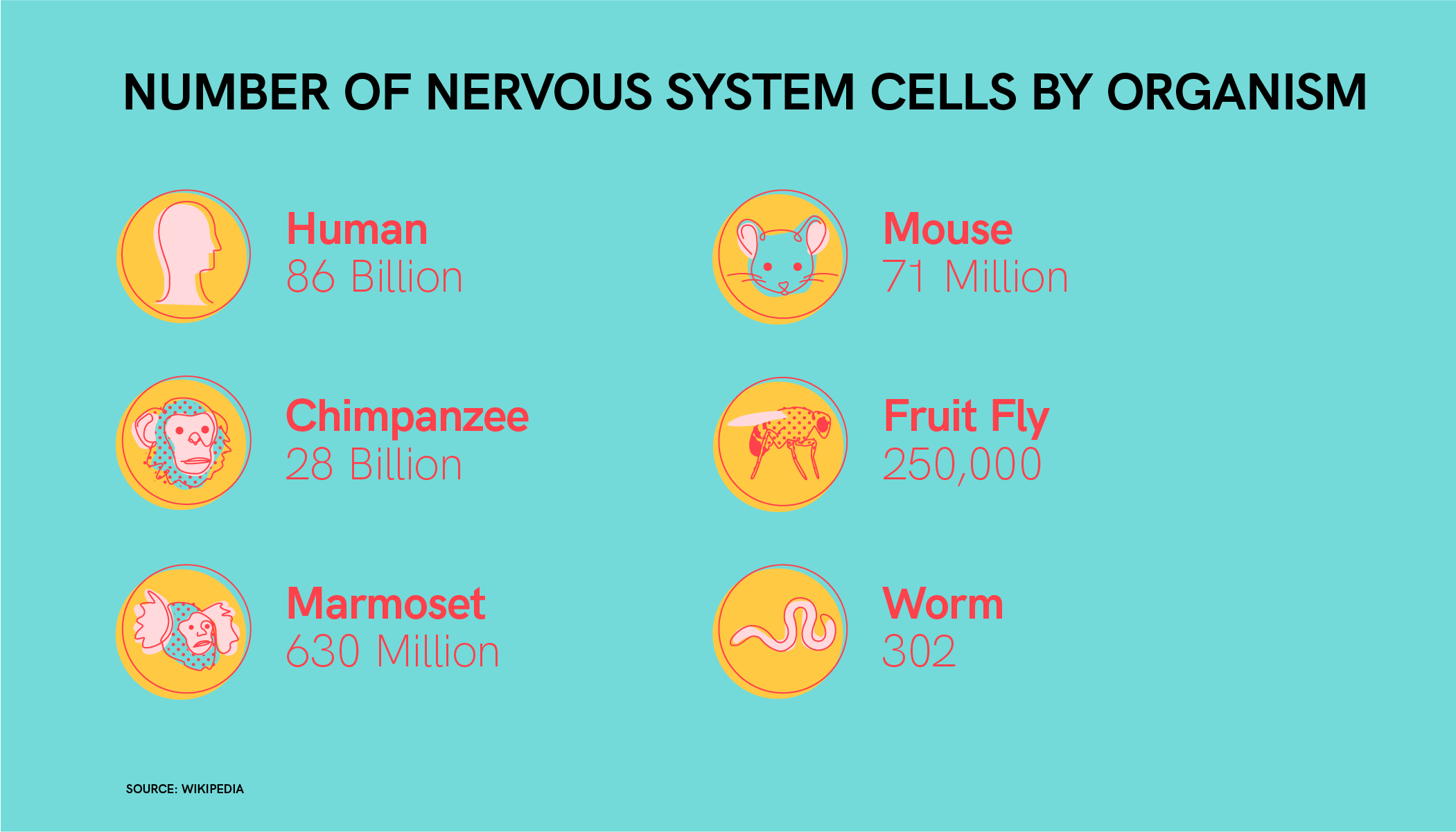 Illustrated comparison chart of the number of nervous systems cells in a variety of organisms from the human with 86 billions cells to the worm with 302 cells.