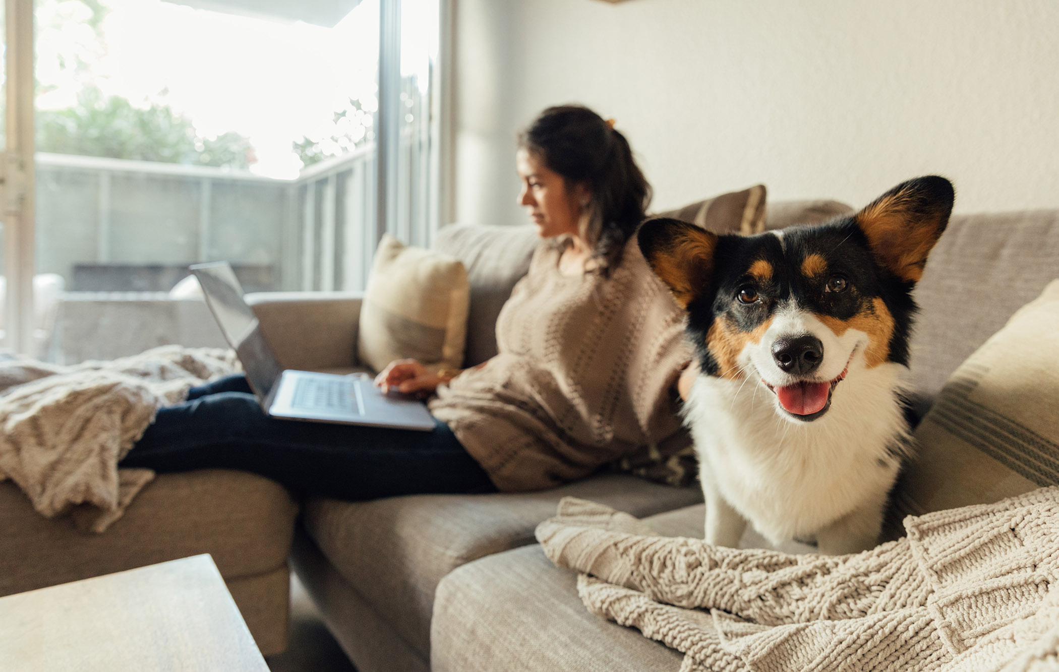 A women sits on her couch working on a laptops and her pet Corgi looks into the care with its tongue out.